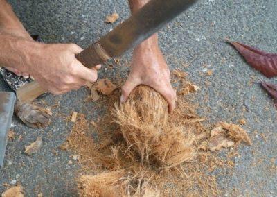 Ouverture d'une Noix de coco